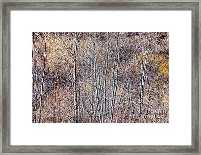 Brown Winter Forest With Bare Trees Framed Print