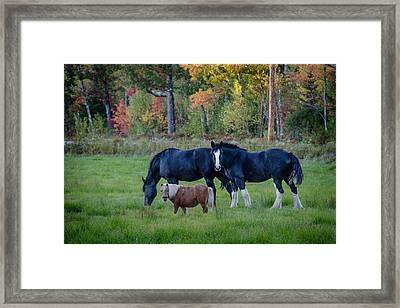 Brownfield Horses Framed Print