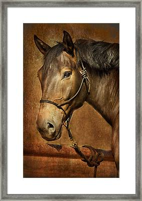 Brownie Framed Print