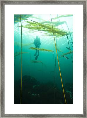 Browning Passage, Scuba Diving Framed Print by Stuart Westmorland