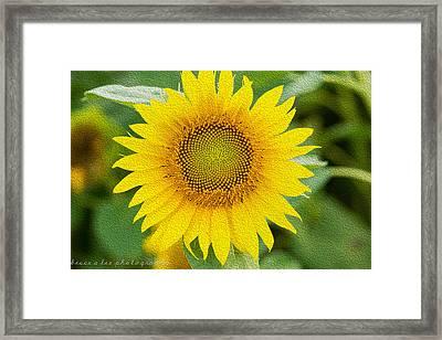 Sunflower Framed Print by Bruce A Lee
