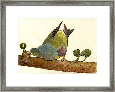 Bruce S Green Pigeon Framed Print by Juan  Bosco