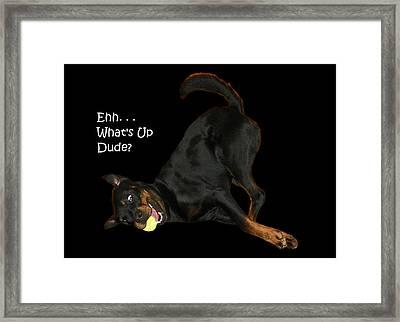 Bruce Framed Print