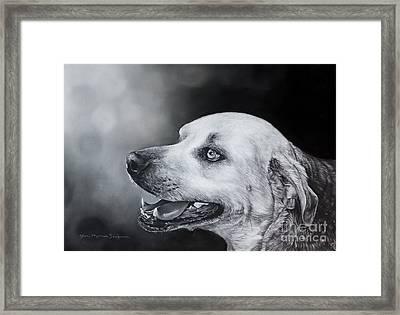 Bruiser Framed Print