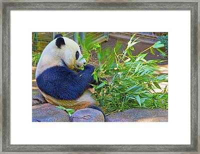Framed Print featuring the photograph Brunch On The Patio by Gary Holmes