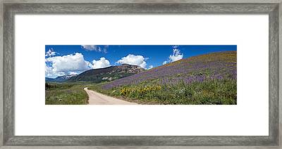 Brush Creek Road And Hillside Framed Print by Panoramic Images