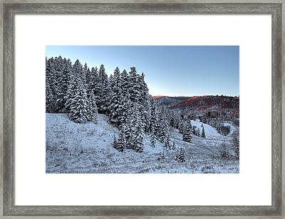 Brush Of Winter Framed Print by David Andersen