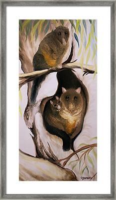 Brush Tail Possum Framed Print