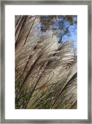 Brushes Of Autumn  Framed Print by Neal Eslinger