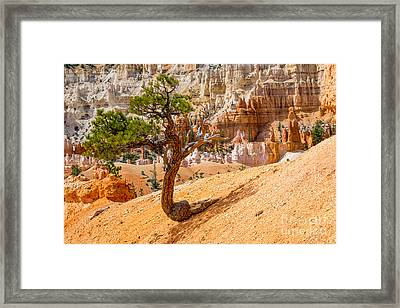 Bryce Canyon Np Framed Print by Juergen Klust