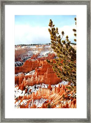 Bryce Canyon Pine Side Framed Print by Marti Green