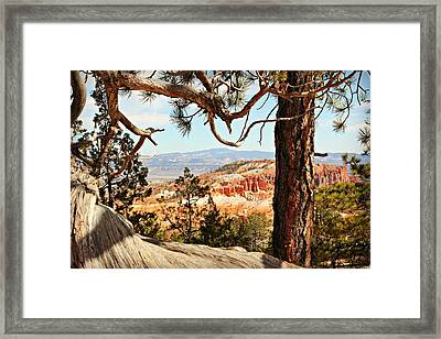 Bryce Canyon Through The Trees Framed Print
