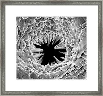 Bryozoan Pore Framed Print by Natural History Museum, London