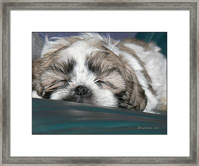 Bubba Framed Print by EricaMaxine  Price