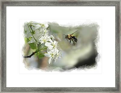 Bubble Bee Looking For Nectar Framed Print by Dan Friend