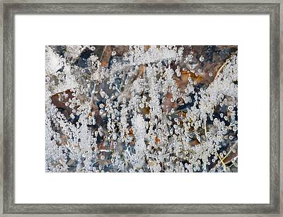 Bubble Up II Framed Print