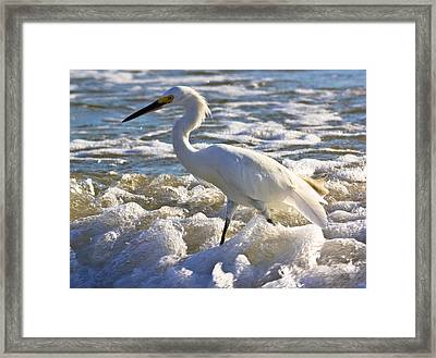 Bubbles Around Snowy Egret Framed Print