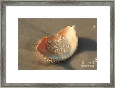 Bubbly Framed Print by Adam Jewell