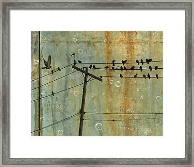 Bubbly Birds Framed Print