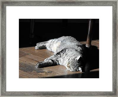 Bubby Framed Print by David and Lynn Keller
