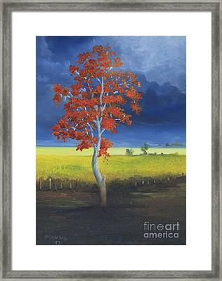 Bucare Tree Framed Print