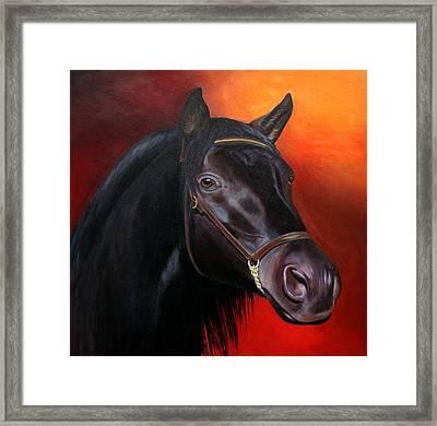 Bucephalas - Horse Of Alexander The Great Framed Print