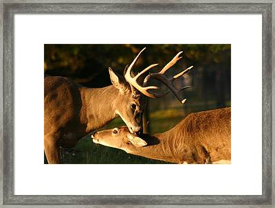 Buck And Friend Framed Print