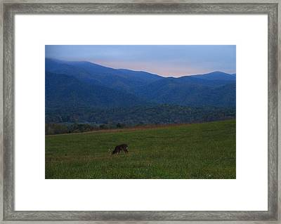 Buck At Sunrise Framed Print by Dan Sproul