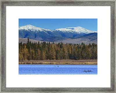 Buck Crossing Cherry Pond Framed Print