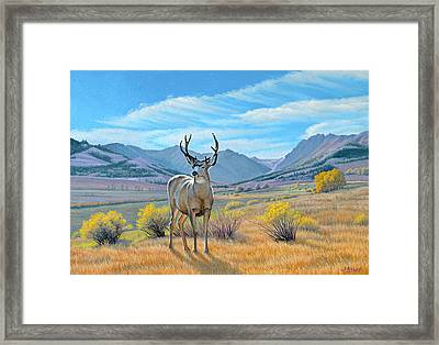 'buck Deer-tom Miner Basin' Framed Print by Paul Krapf
