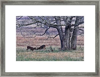 Buck Fight Framed Print by Leslie Kirk