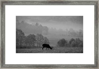 Buck In Cades Cove Black And White Framed Print by Dan Sproul