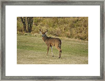 Framed Print featuring the photograph Buck In Field by Judy  Johnson