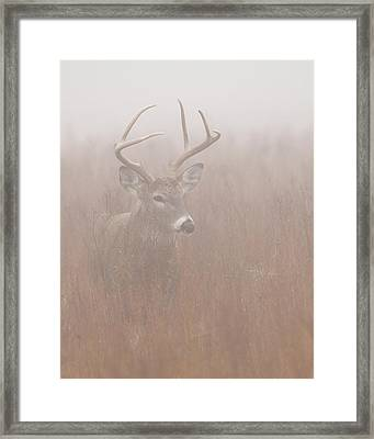 Buck In Fog Framed Print