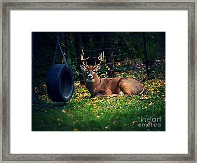 Buck In The Back Yard Framed Print