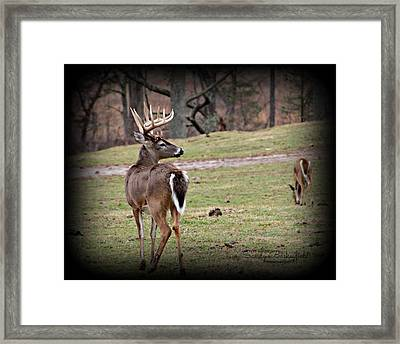 Buck In The Cove Framed Print