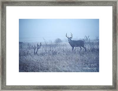 Buck In The Mist Framed Print by Thomas R Fletcher