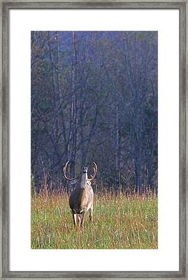 Buck In The Rut Framed Print by Dan Sproul
