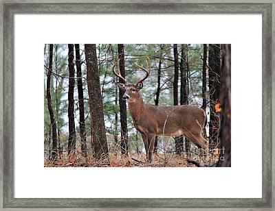 Buck Master Framed Print by Leslie Kirk