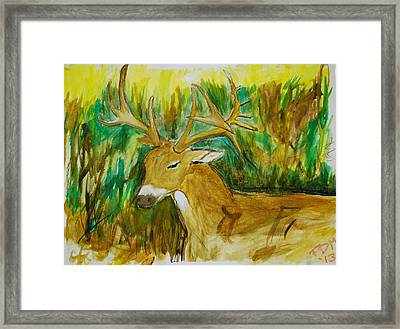 Buck Of A Lifetime Framed Print