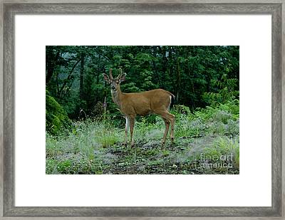 Framed Print featuring the photograph Buck by Rod Wiens