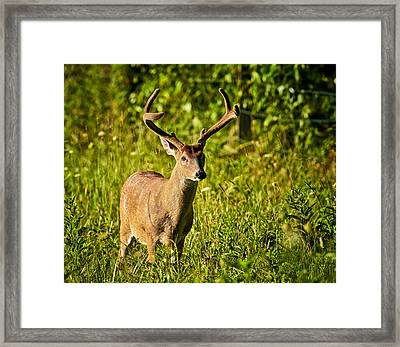 Framed Print featuring the photograph Buck by Tyson and Kathy Smith
