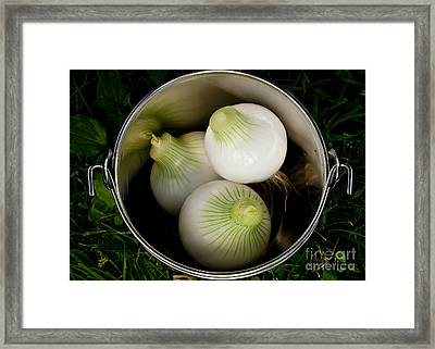 Bucket Of Onions Framed Print by Wilma  Birdwell