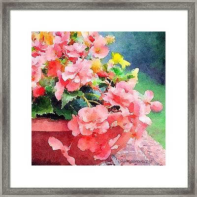 Bucket O Begonias Framed Print by Anna Porter