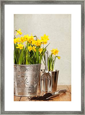 Buckets Of Daffodils Framed Print by Amanda And Christopher Elwell