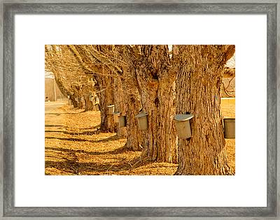 Buckets Of Gold Framed Print