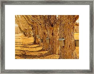 Buckets Of Gold Framed Print by Melanie Leo