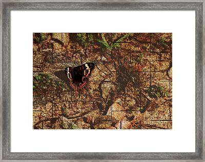Buckeye Butterfly Framed Print by Amanda Collins