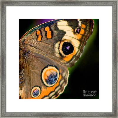 Buckeye Butterfly Wing Square Framed Print