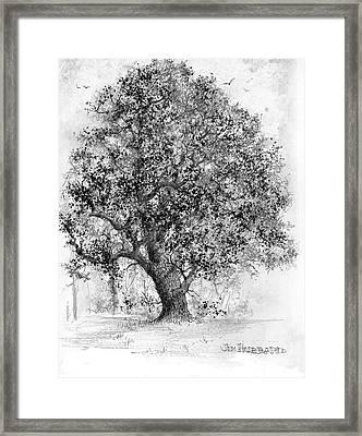 Buckeye Framed Print by Jim Hubbard